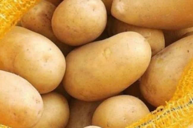 اتحاد غرف الزراعة : كيلو البطاطا سينخفض لنحو 250 ليرة خلال يومين لهذا السبب