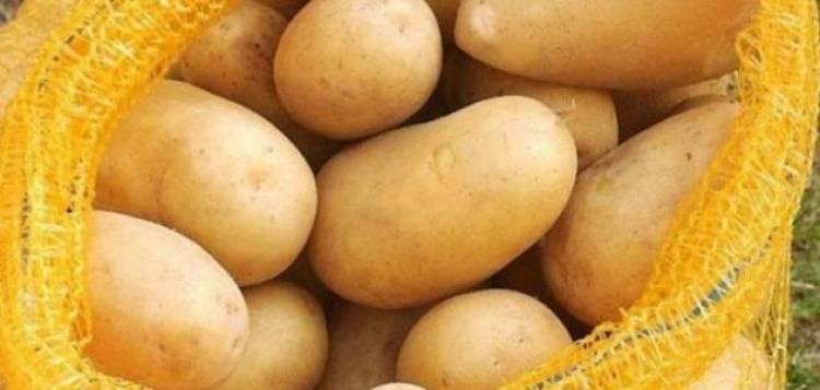 توقع بانخفاض أسعار البطاطا مع إعلان السورية للتجارة استيراد 5 آلاف طن